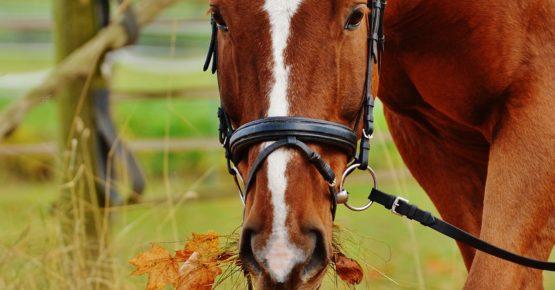 affittacamere Villaportosulmagra - passeggiate a cavallo